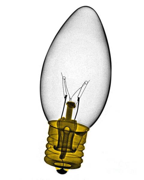 Photograph - Tree Light Bulb X-ray by Bert Myers