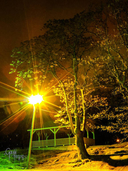 Photograph - Tree Lights by Glenn Feron