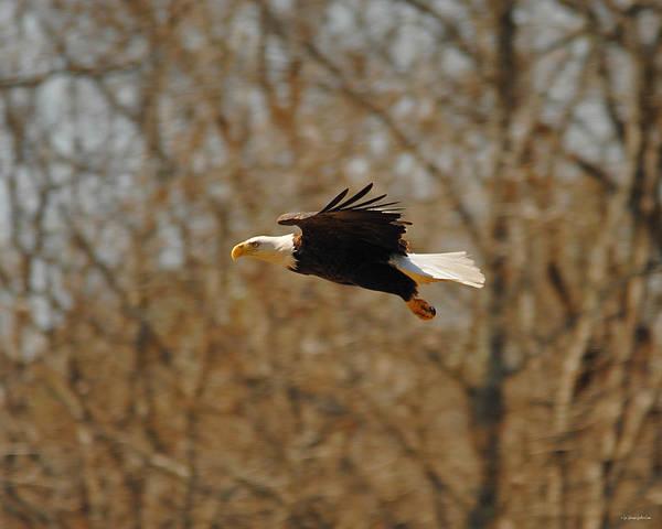 Photograph - Tree Line Flight by Jai Johnson