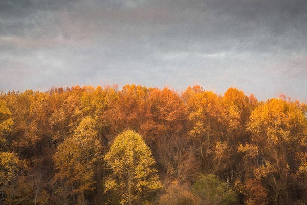 Photograph - Tree Line In Autumn by Gary Slawsky