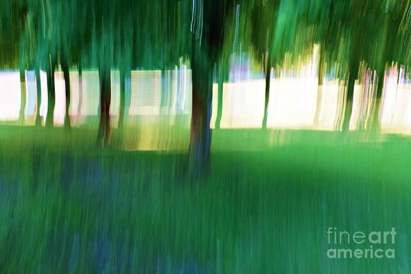 Photograph - Tree Line by Patricia Strand