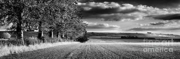 Treeline Photograph - Tree Line by Rod McLean