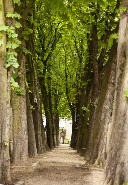 Famous Cemeteries Photograph - Tree Lined Avenue At Pere Lachaise by Georgia Fowler