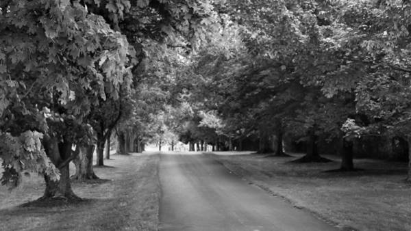 Photograph - Tree Lined Lane by Guy Whiteley