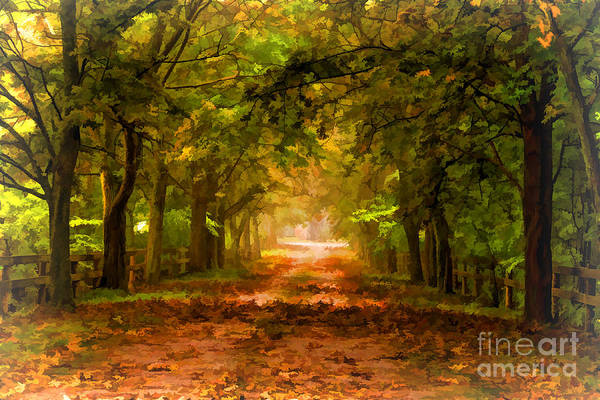 Photograph - Tree Lined Lane In Autumn by Les Palenik