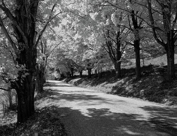 Wall Art - Photograph - Tree-lined Rural New England Road by Vintage Images