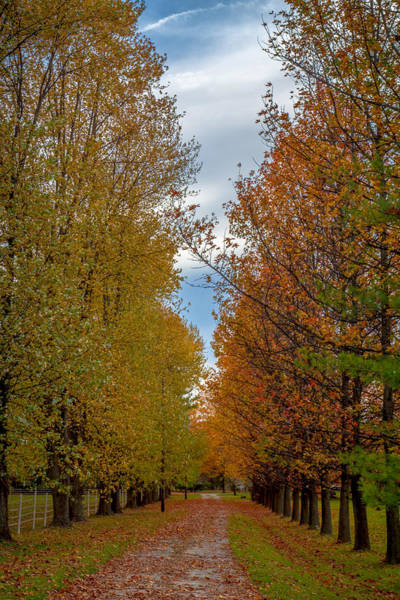 Photograph - Tree Lines Path In Fall by Ron Pate