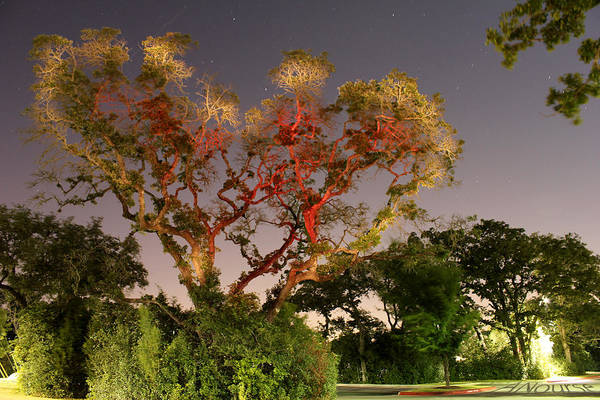Wall Art - Photograph - Tree Love by Andrew Nourse