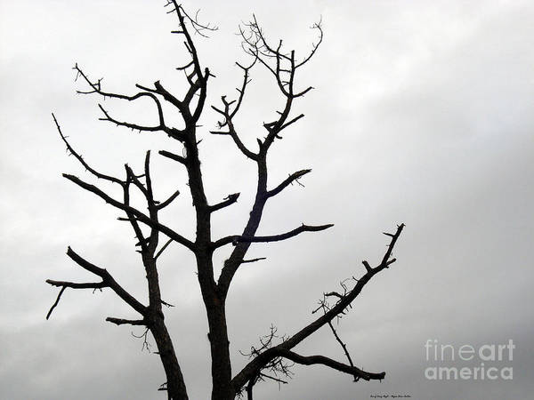 Photograph - Tree Of Every Angle by Megan Dirsa-DuBois
