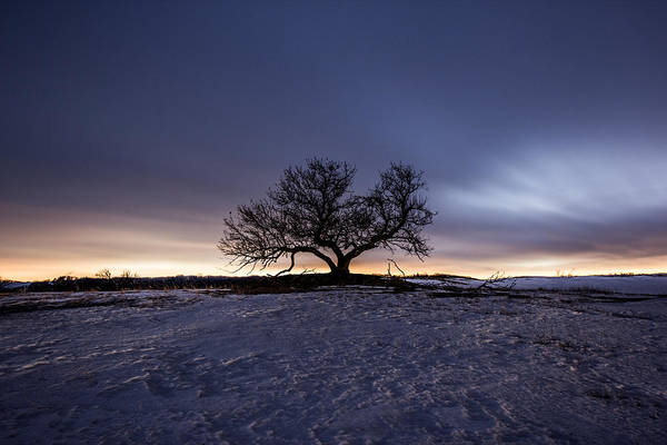 Photograph - Tree Of Insanity by Aaron J Groen