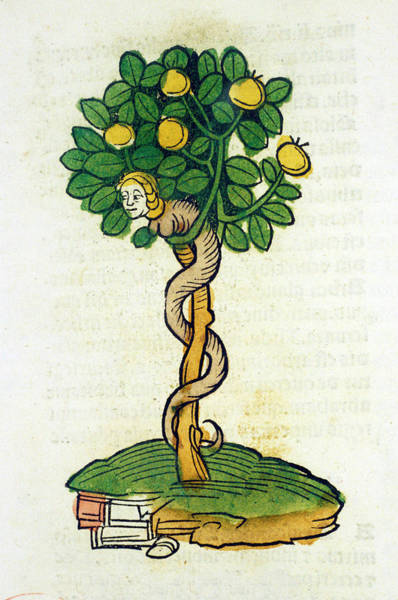 Woodcut Photograph - Tree Of Knowledge by National Library Of Medicine
