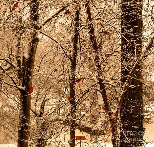 Wall Art - Photograph - Tree Of Life by Jinx Farmer
