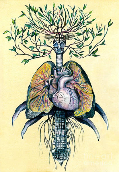 Plant Anatomy Wall Art - Mixed Media - Tree Of Life by Michael Volpicelli