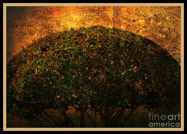 Photograph - Tree Of Life by Susanne Van Hulst