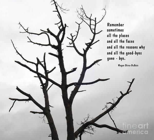 Photograph - Tree Of Reverie by Megan Dirsa-DuBois