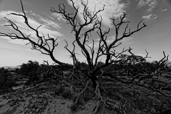 Wall Art - Photograph - Tree Of The Dead by Jonathan Davison