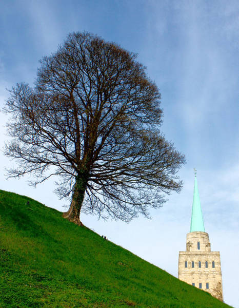 Photograph - Tree On A Hill by Jeremy Hayden