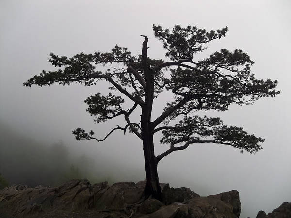 Photograph - Tree On The Blue Ridge Parkway by Greg Reed