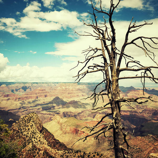 Southwest Usa Photograph - Tree On The Grand Canyon National Park by Franckreporter