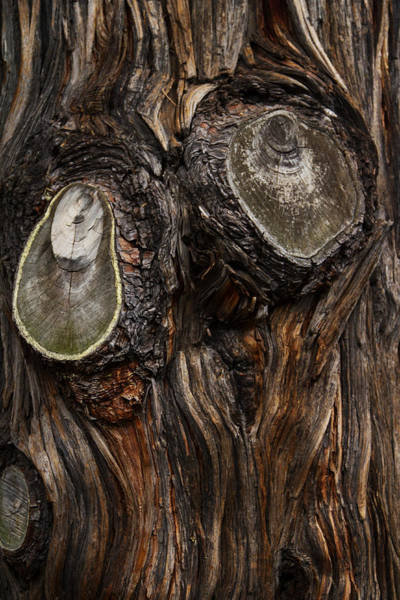 Anthropromorphic Photograph - Tree Owl by Guy Shultz