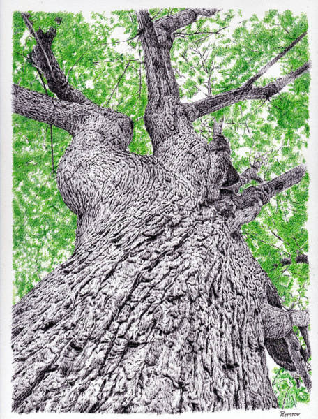 Drawing - Tree Pen Drawing 4 by Remrov