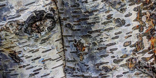 Wall Art - Photograph - Tree People by Heidi Smith