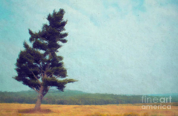 Wall Art - Photograph - Tree Personality  by Aimelle