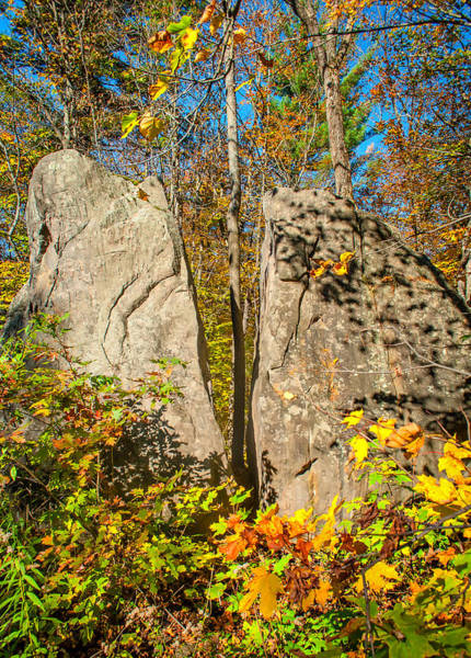 Glacial Erratic Photograph - Tree Power by Steve Harrington