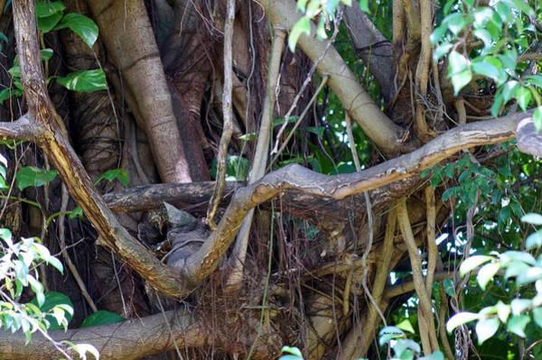 Photograph - Tree by Rafael Salazar
