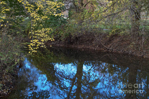 Photograph - Tree Reflection by William Norton