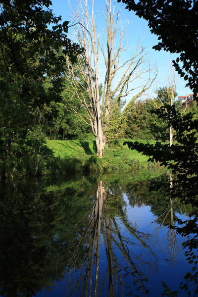 Photograph - Tree Reflections by Aidan Moran