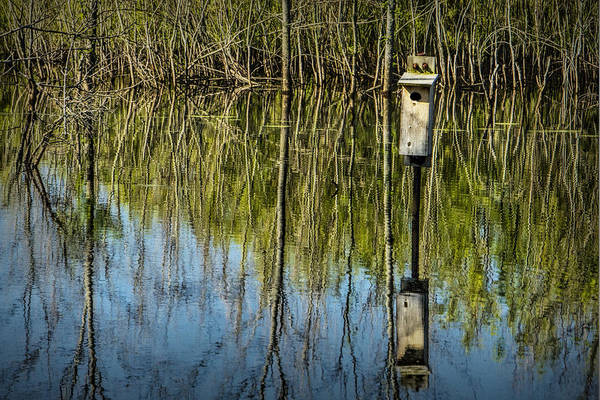 Photograph - Tree Reflections And Nesting Box In A Pond In West Michigan by Randall Nyhof