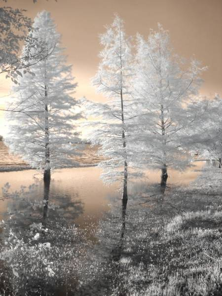 Linder Wall Art - Photograph - Tree Reflections by Jane Linders