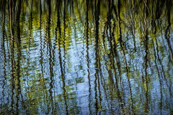 Photograph - Tree Reflections On A Pond In West Michigan by Randall Nyhof
