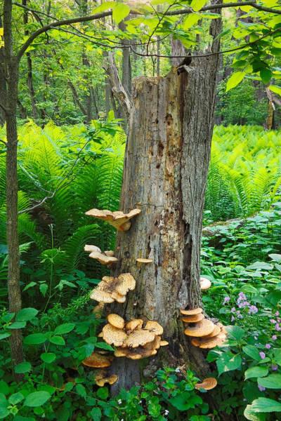 Photograph - Tree Remnant by Lars Lentz