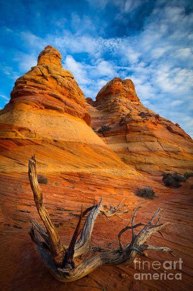 Vermilion Cliffs Wall Art - Photograph - Tree Remnants by Inge Johnsson