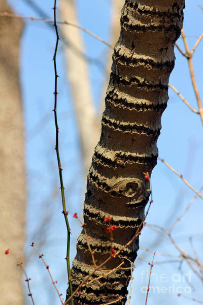 Photograph - Tree Rings by Karen Adams