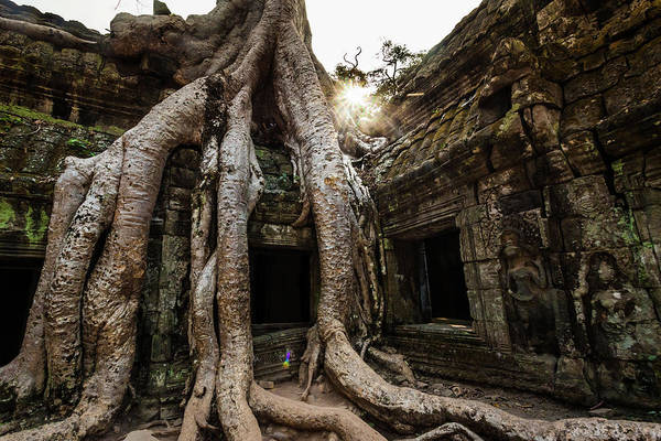 Cambodian Photograph - Tree Roots Growing Out Of Tah Prohm by © Francois Marclay