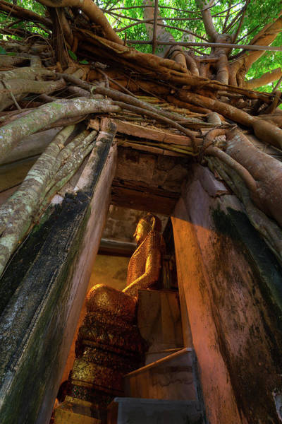 Wall Art - Photograph - Tree Roots Outside Old Temple by Mantaphoto