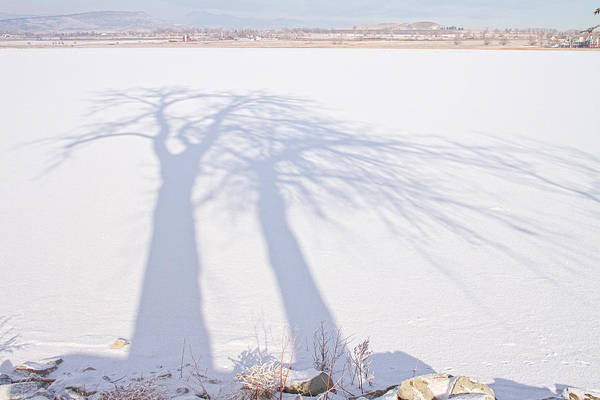 Photograph - Tree Shadow Puppets by James BO Insogna