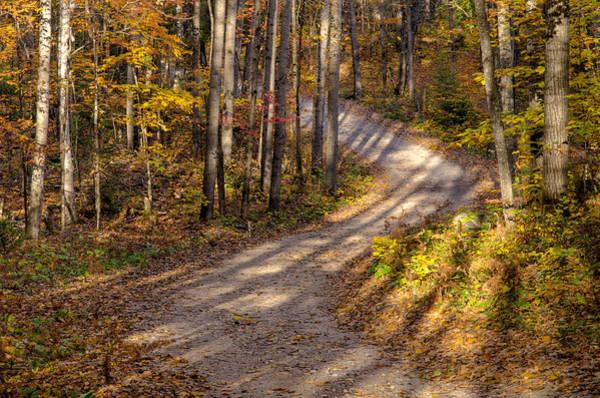 Photograph - Tree Shadows by Rob Huntley