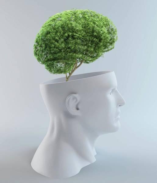 Tree Face Photograph - Tree-shaped Brain by Andrzej Wojcicki/science Photo Library