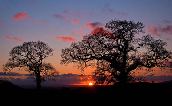 Photograph - Tree Silhouette At Sunset by Pete Hemington