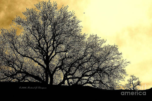 Photograph - Tree Silhouette by Richard J Thompson