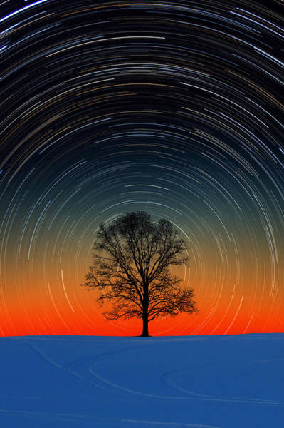 Photograph - Tree Silhouette With Star Trails by Larry Landolfi
