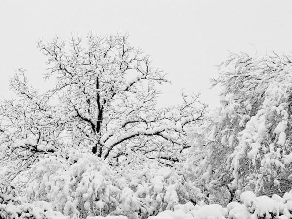Photograph - Tree Snow by Erich Grant