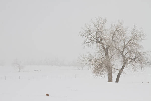 Photograph - Tree Snow Fog And The Prairie Dog by James BO Insogna