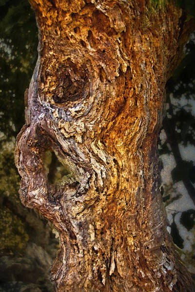 Photograph - Tree Spirit by Jemmy Archer