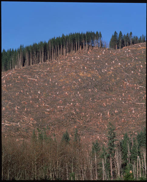 Forestry Photograph - Tree Stumps On Clear-cut Hillside by Simon Fraser/science Photo Library