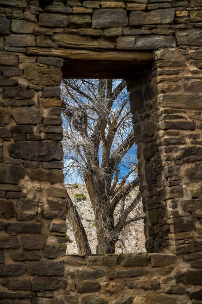 Photograph - Tree Through Window by Ron Pate
